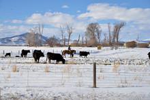 Rancher On Horseback Checks A ...