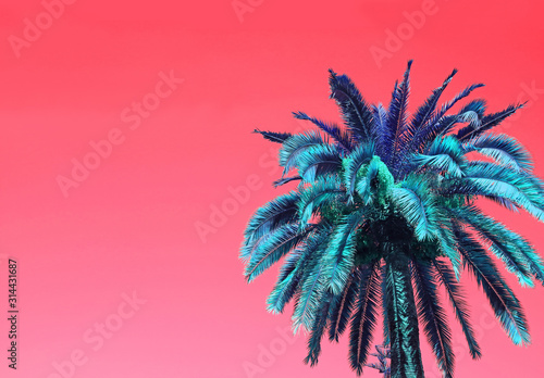 Pop Art Surreal Style Blue Palm Tree on Coral Pink Background with Copy Space