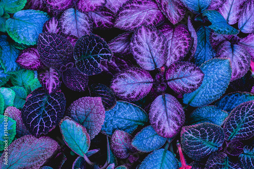 Fototapete - closeup nature view of green leaf in garden, dark wallpaper concept, nature background, tropical leaf