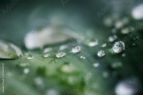 Perle di acqua Slika na platnu