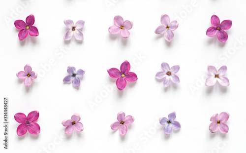 Rows of many small purple and pink lilac flowers on white background Canvas Print