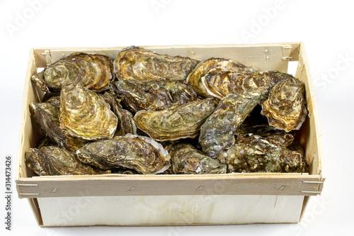 Photo bourriche d'huîtres françaises Marennes Oléron