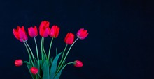 A Bouquet Of Red Tulip Flowers On A Dark Blue Background With A Close Up Copy Space
