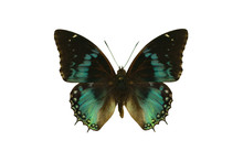 Color Beautiful Butterfly Flyi...