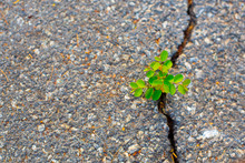 Trees That Grow On The Surface Of The Concrete Cracks.