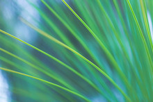 Abstract Green Background Of A...