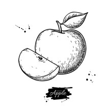 Apple Vector Drawing. Hand Drawn Fruit And Slice. Summer Food