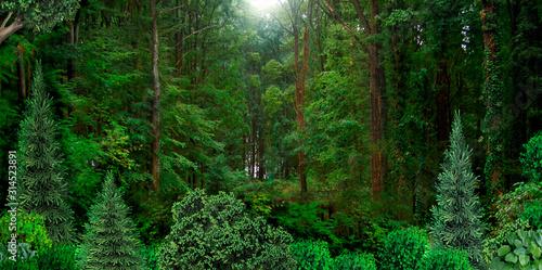 Photo Wild dense forest natural banner