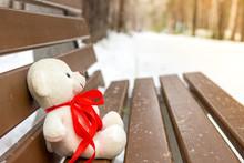 Sad Teddy Bear In Winter, Lost...