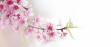 Spring Flower Bloom Nature Bac...