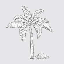 Hand Drawn Banana Tropical Palm Tree. Palm Tree Logo. Tropically Wild Jungle Forest. Growing And Selling Bananas. Home Gardening.1