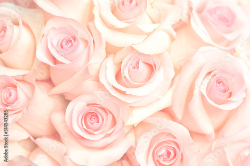 Photo Coral rose flower. Detailed retouch