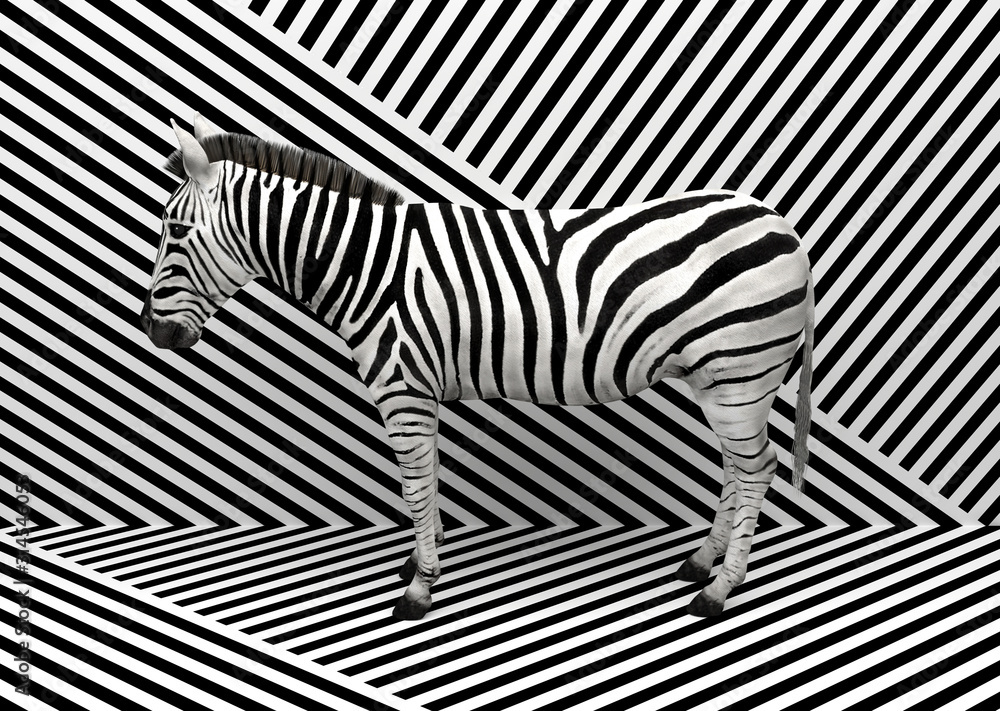Fototapeta Wild animal zebra standing indoors merging with a striped black and white background.  Creative conceptual illustration. 3D rendering.