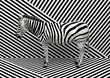 Wild animal zebra standing indoors merging with a striped black and white background.  Creative conceptual illustration. 3D rendering.
