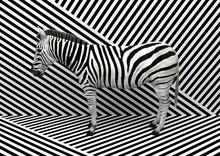 Wild Animal Zebra Standing Ind...