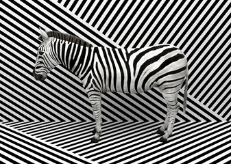 FototapetaWild animal zebra standing indoors merging with a striped black and white background. Creative conceptual illustration. 3D rendering.
