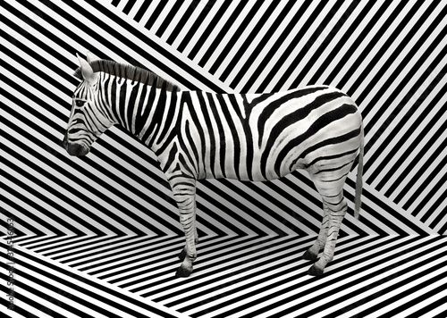 Fototapeta Wild animal zebra standing indoors merging with a striped black and white background.  Creative conceptual illustration. 3D rendering. obraz