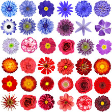 Big Collection Of Red, Purple And Blue Wild Flowers Isolated On White