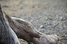 Close Up Of Textured Driftwood...