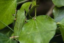 Rainette Verte Dans Son Milieu