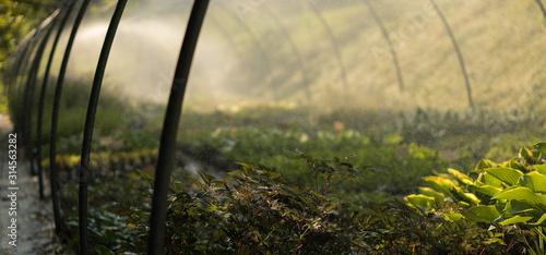 Fototapeta arrosage horticole obraz