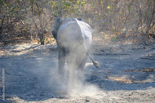 Elephant in Mana Pools National Park, Zimbabwe Canvas Print