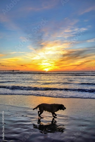 dog on the beach Canvas Print