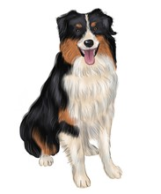 Bernese Mountain Dog. Realistic Portrait Of Berner Sennenhund On Watercolor Background. Large Dog Breeds. Animal Art Collection: Dogs. Hand Drawn Pet Illustration. Good For T-shirt, Pillow, Pet Shop