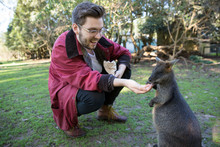 Tourist Feeding A Small Wallaby