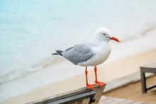 A Seagull Sitting On Top Of A ...