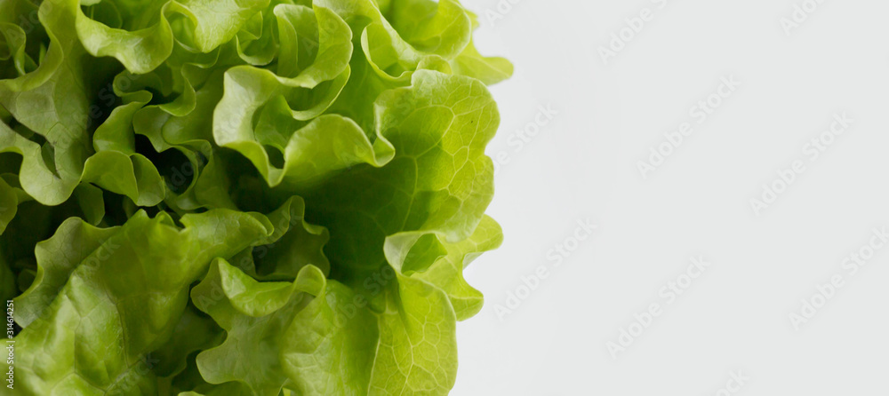 Fototapeta fresh green salad on a white background