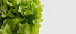fresh green salad on a white background