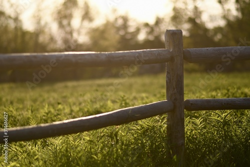 Obraz Wooden fence in a garden surrounded by trees and greenery under sunlight with a blurry background - fototapety do salonu