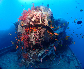Fototapeta na wymiar Scuba Diving Red Sea Egypt