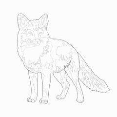 Vector illustration. A fox. Image, black line.