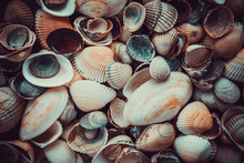 Mixed Colorful Sea Shells As B...