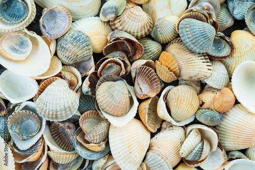 Photo  Mixed colorful sea shells as background