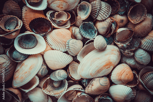 Mixed colorful sea shells as background Canvas Print