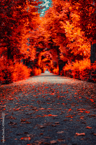 Fototapety, obrazy: colorful autumn tree alley