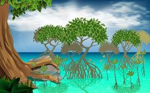 Mangrove Forest At The Sea