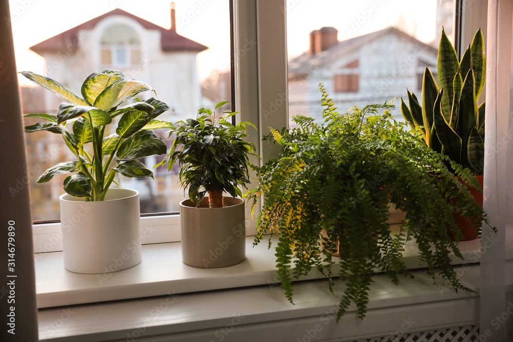 Fototapeta Different potted plants on window sill at home
