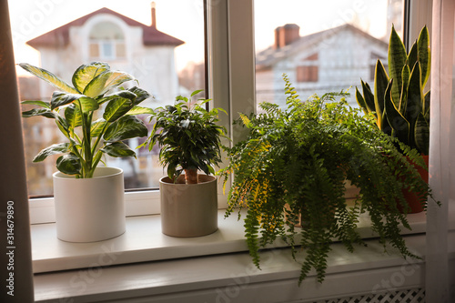 Fotomural  Different potted plants on window sill at home