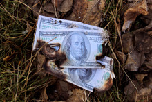 Burnt Banknotes On The Grass. Burned Fragment Of US Dollar Banknote On The Ground. Concept Of Financial Crisis. Blackened Charred Edges Of 100 United States Dollar Money.