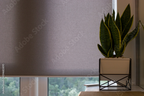 Automatic roller blinds on the window Canvas Print