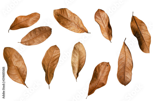 Photo Many​ Brown dry leaves in​ variety of shapes