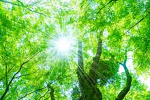 新緑の木と木漏れ日