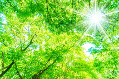 新緑の木と木漏れ日 - 314695469