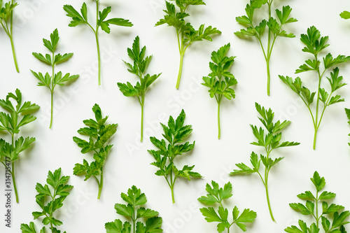 Fotografía  fresh organic parsley leaves arranged in a row on a white background
