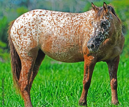 Fotografía  cavalo