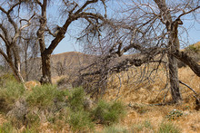 Fire Damaged Tree In Scrub Desert Landscape Vista